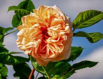 绿叶花卉植物特写摄影高清图片
