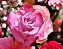 花丛中的粉色鲜花摄影高清图片