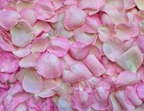 落地上的粉色花瓣摄影高清图片