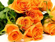 放一起的玫瑰花束摄影高清图片