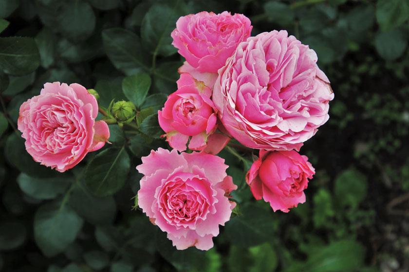 在春天绽放的花朵摄影高清图片