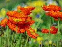 绽放出朵朵鲜花的花卉高清图片
