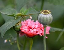 绿叶红花花卉植物摄影高清图片