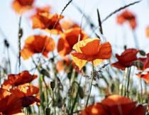 花卉植物逆光效果摄影高清图片