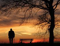 大树下孤独老人的背影高清图片