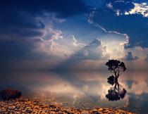 清澈湖水中的树木摄影高清图片