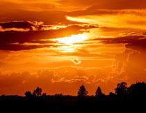 夕阳晚霞树木剪影风光高清图片