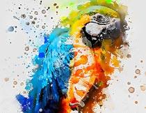 创意的水彩油漆喷溅效果PS动作